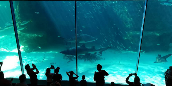 2 oceans aquarium in Capetown
